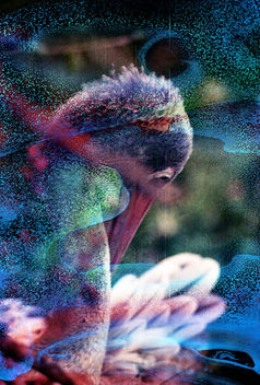 Pelican - Kostenloses image #283413