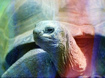giant tortoise - image #283433 gratis