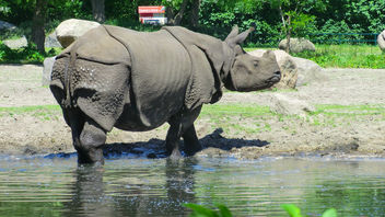 Berlin: Asian Rhino, Tierpark Friedrichsfelde - Free image #283593