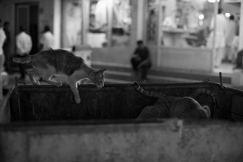 Stray Cats - Free image #283653
