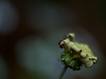 Dead flower - image #284083 gratis