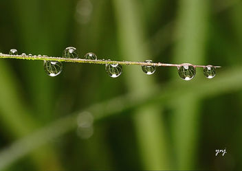 Wet - image gratuit #284443