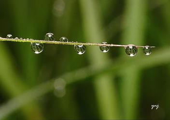 Wet - Free image #284443