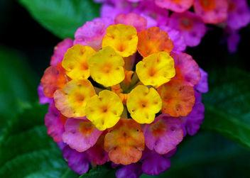 flower-10082807 - бесплатный image #284473