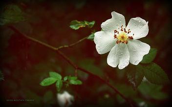 Flower - Kostenloses image #284483