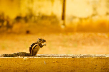 Squirrel - 3 - image gratuit #284503