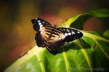 Broken Butterfly (DSC_0051) - Free image #284553