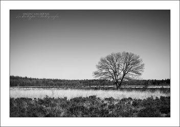 B&W Tree - Free image #284983