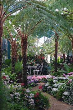 Le petit jardin tropical (Serres Royales de Laken -Bruxelles) - image #285073 gratis