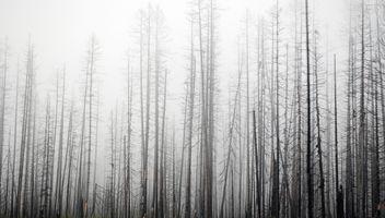 Fog - Free image #285343