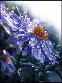 Blue Rain Drops - Free image #285423