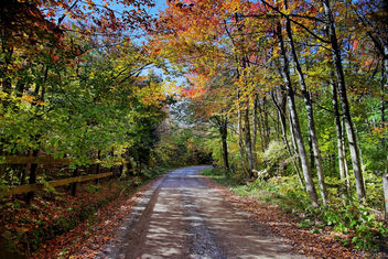 Autumn trees country road fence - image gratuit #285513