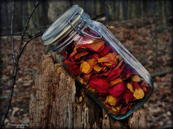 Flower Petals - Free image #285943