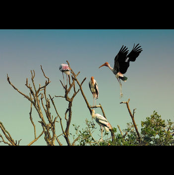 Painted stork returns home! - image gratuit #286073
