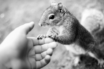 Squirrel - image gratuit(e) #286083