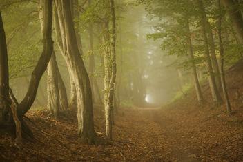 Path II - Free image #286663