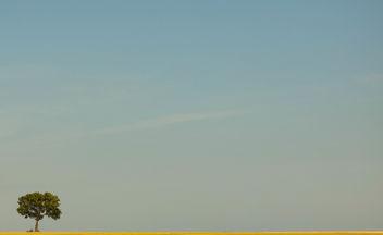 Arid desert in Belgium - image gratuit #286813