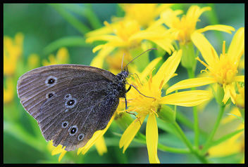 Eating butterfly - image #287003 gratis