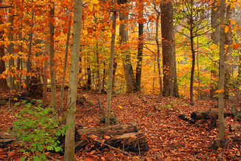 Beartown Woods Natural Area (2) - Free image #287113