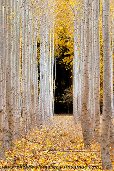 Autumn at the tree farm - Free image #287143