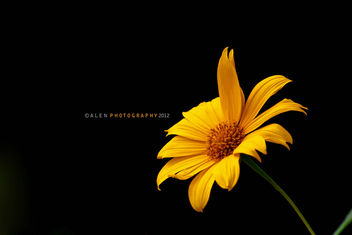 Flower - Kostenloses image #287233