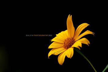Flower - Free image #287233