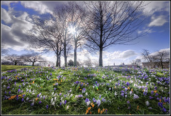 Spring at last - image gratuit #288043