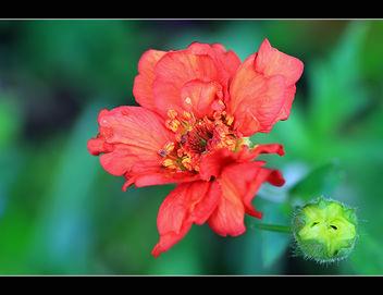 Wonderful flowers - Free image #288283