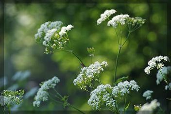 Spring feeling,