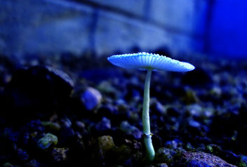 mushroom - image gratuit(e) #288773