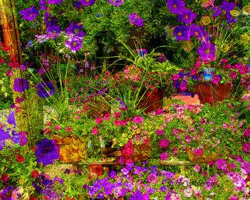 Buy Flowers - image #288913 gratis