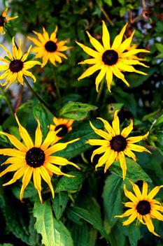 Peak District Flowers #dailyshoot - Free image #289343