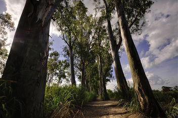 Trees - image gratuit #289603