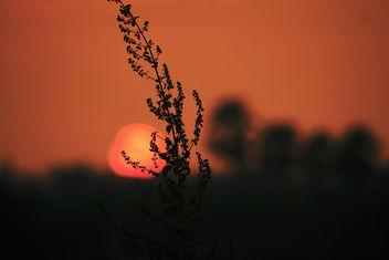 Sunset Bliss... - Free image #290073