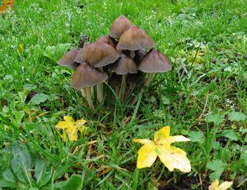 Hein, qu'on est beau(x), tout noir(s), dans l'herbe verte ? ... Et ces petites feuilles jaunes, jolies, non ? ! :) - Free image #290263