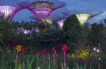 Gardens by the Bay,Singapore - Free image #290443