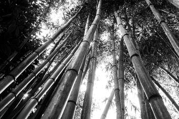 Bamboo I - image gratuit(e) #290453