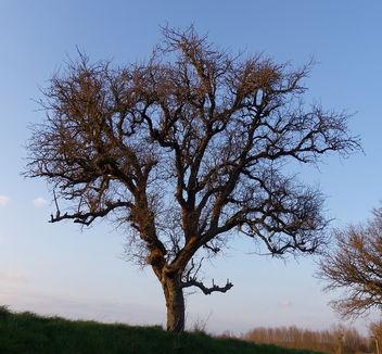 Au coucher d'un soleil d'hiver, dans le plus simple appareil :-) - image #290723 gratis