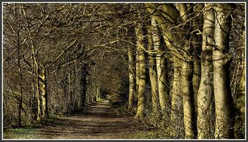 P1150428 Oaks Park 26.02.14 .. - image gratuit(e) #291033