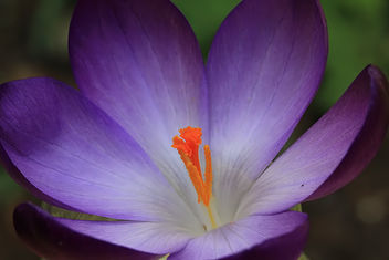Purple and orange - image #291153 gratis