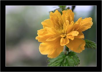 Spring ! - image gratuit #291233