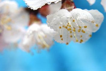 Spring - бесплатный image #291453