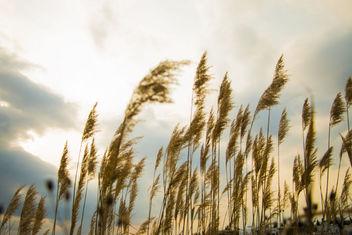 Feel the breeze - бесплатный image #291523