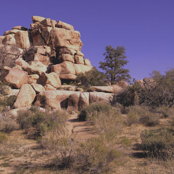 Near Barker Dam, Joshua Tree - бесплатный image #291533