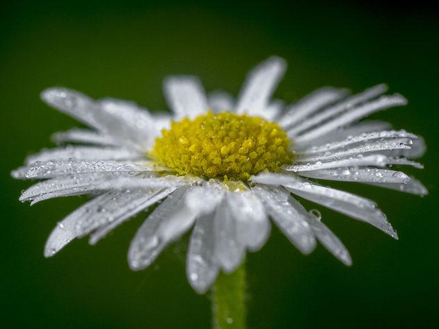 Washed flower - image #291823 gratis