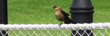 Bird - image #292123 gratis