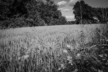 Grain - Free image #292173