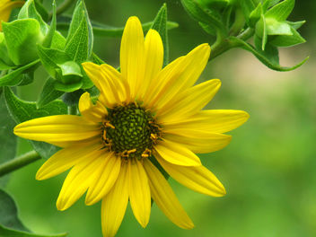 Flower - image gratuit(e) #292723