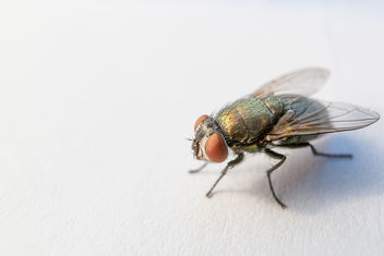 Fly - Kostenloses image #292833