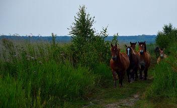 horses - Free image #293113